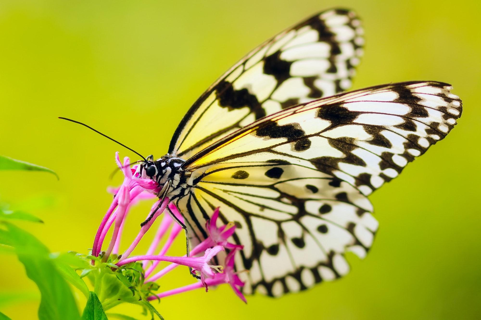 Butterfly Full-Body Release